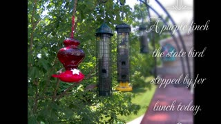 Bird Feeder in New Hampshire