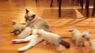 Mother of cats breastfeed their young children