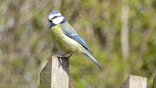 Nicer birds