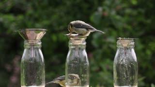 Woodpecker Woodpecker