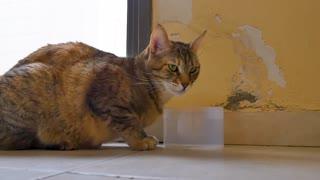Cat Drink Home Sleepy Animal Kitten Kitty Water