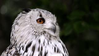 Owls birds