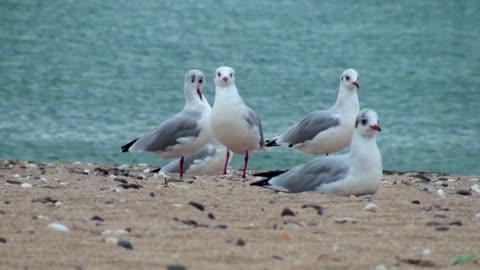 Nice Birds 🐦