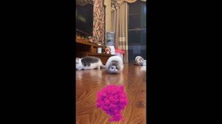 Cute Cat found something
