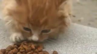 Fed a homeless kitten
