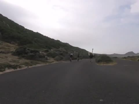 Cyclists chased by an ostrich in Africa