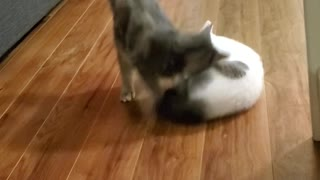 Sneaky Sliding Kitty Surprises Friend