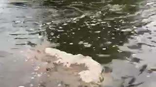 Feeling beautiful resting feet in a fresh river