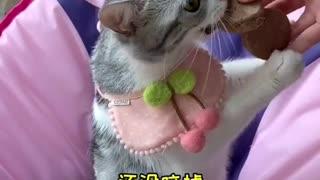 Kittens eat cookies, eat cat food