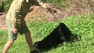 Eastern Brown Snake Hangs in Backyard