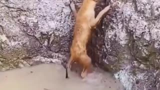 Dog helps another dog