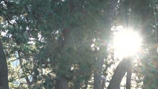 Sunlight seen through the trees 2