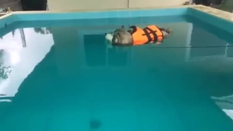 This is the only husky in the world who hate swimming