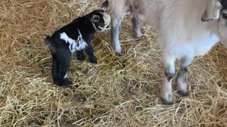 Pretty little kid born this spring.