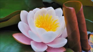 How To Create A New Earth - Musical Version - (Part 2 of 7) - The Path of the Lotus