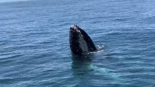 High Fived by Humpback Whale