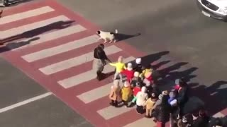 This Dog has a Job to Protect these Children