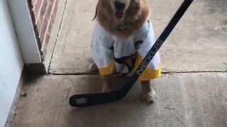 Sports-loving dog dresses as hockey player for Halloween