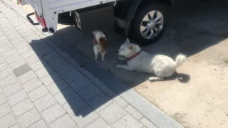 They had a meeting under the truck.