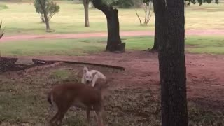 Doggy and Deer Playing Together