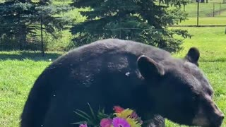 Orphaned Black Bear with Floral Bouquet