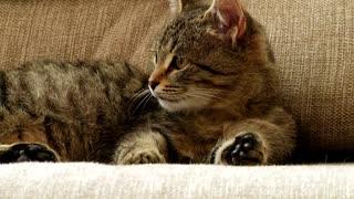 cat makes you laugh!