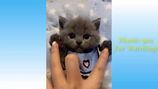 Cute Pets And Funny Animals Having Fun