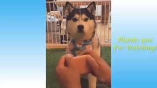 Too Cute Funny Videos