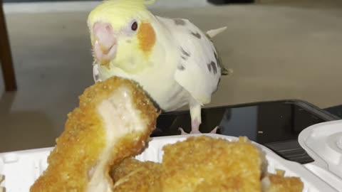 Parrots steals chicken katsu