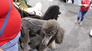 A visit to the Vegas pet show on February 12, 2017.