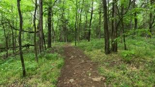 Cedarock Park Trails
