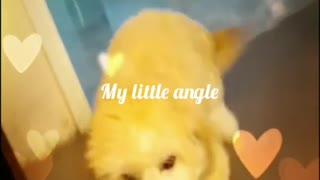 My little angel puppy boy