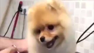 Perrito muy tierno en la peluquería