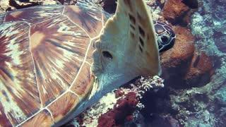 beautiful Turtle in the sea