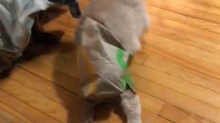 Cat Runs and Rips Through Fast Food Bag