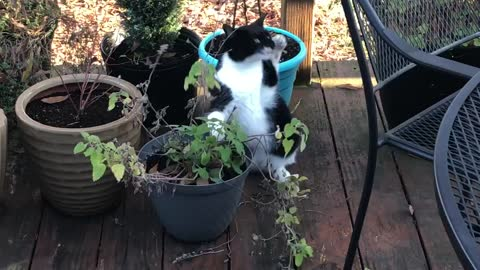 Silly cat eating house plant