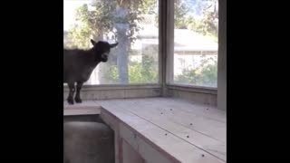 Cute Funny Little Animals