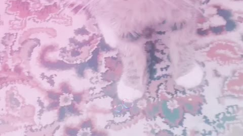 My Adoreable kitten love her 😻