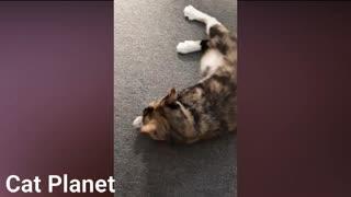 BEST CAT MEMES COMPILATION