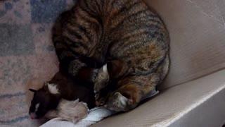 Štene odbacila majka, pogledajte kako je mama maca reagirala