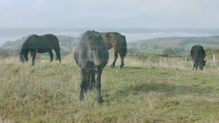 Amazing Wild Animals in the Natural World