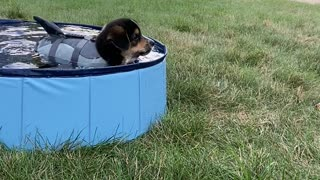 Puppy Not Sure About Swimming
