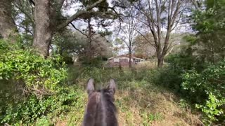 New Horse Property Tour