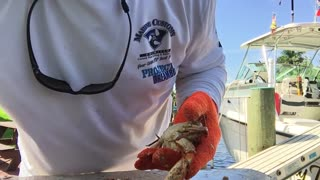 Blue crab lunch