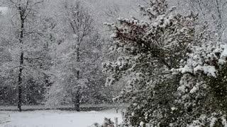 Rare Texas snow