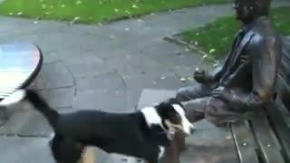 Dog Wants To Play With Male Statue - Very Funny
