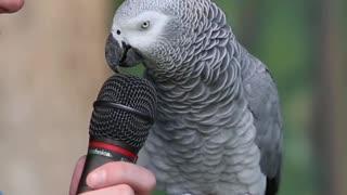 Parrot funny talking video😅😅🤣