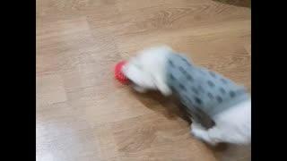 Sliding puppy