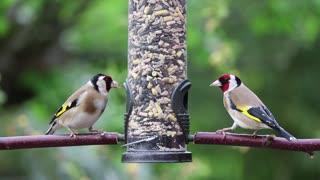 beautiful birds singing (10)