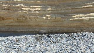 Bird 🐦 Rock in Pacific Beach San Diego California